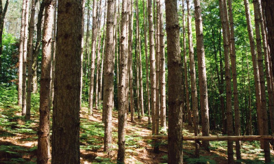 an-army-of-woodland-trees-in-a-copse